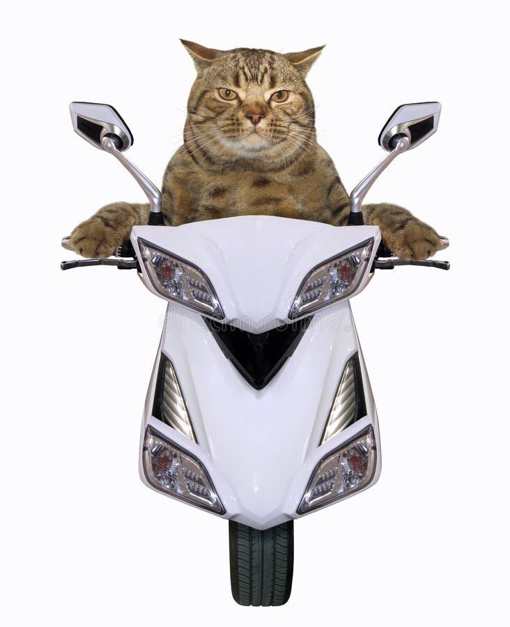 Kattritt en vit sparkcykel fotografering för bildbyråer
