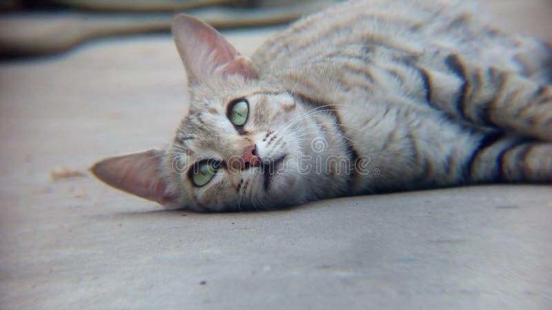 Kattrullning på golvet fotografering för bildbyråer