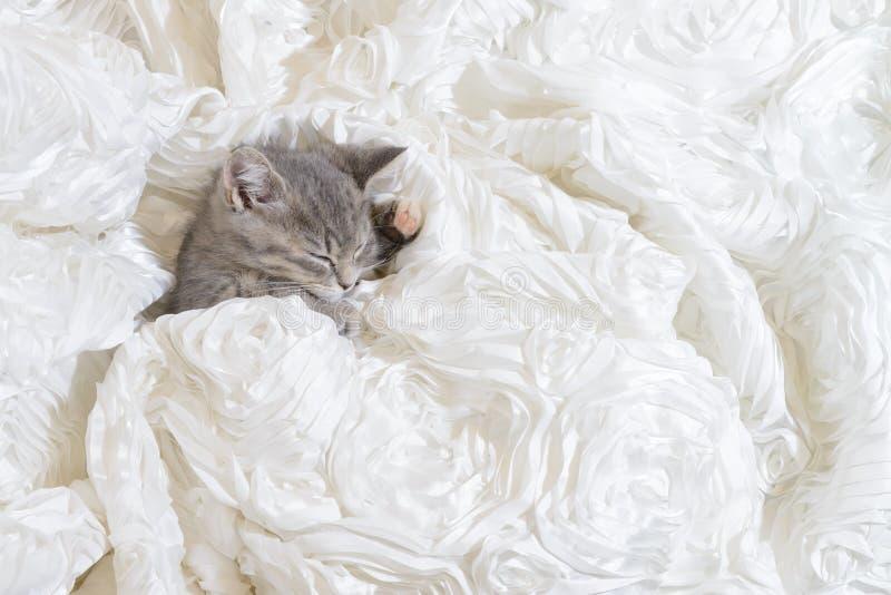 Kattsömn i den vita torkduken arkivbilder