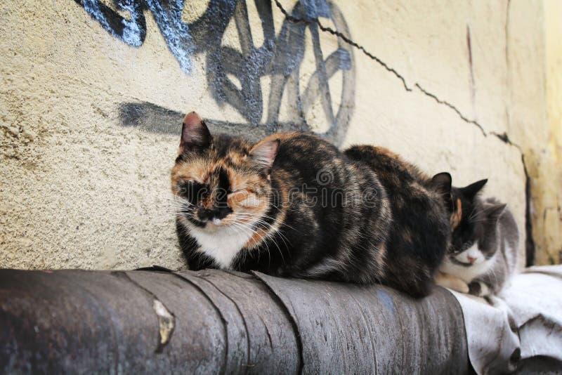 Kattsömn på röret royaltyfri bild
