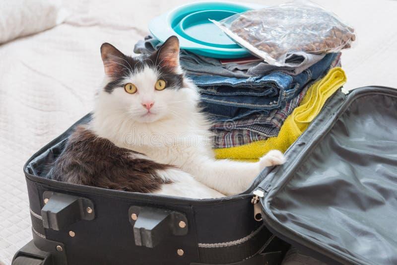 Kattsammanträde i resväskan fotografering för bildbyråer