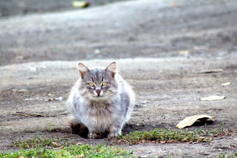 kattsammanträde på vägen som är bruten och som är beströdd med torra sidor arkivbild