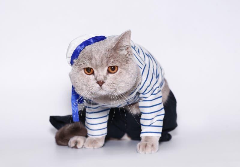 kattsjömandräkt royaltyfri foto