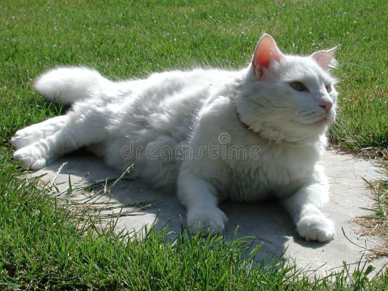 kattskåpbil royaltyfri fotografi