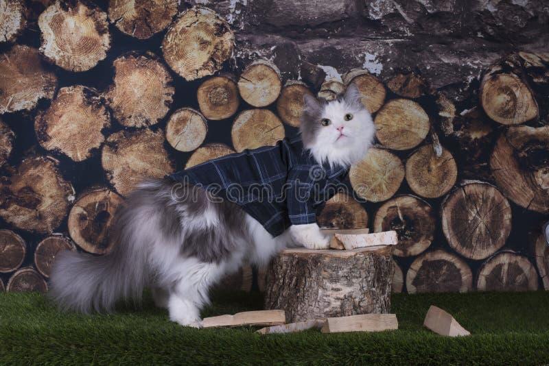 Kattskjorta som hugger av vedträ i trädgården arkivbilder