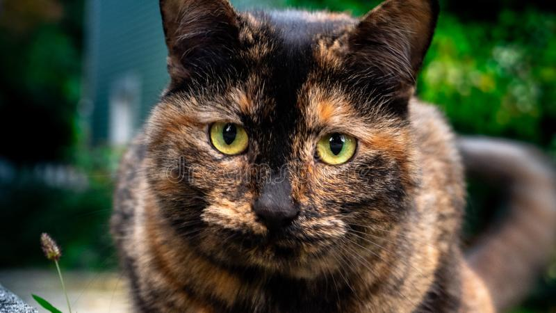 Kattslut upp med oskarp bakgrund royaltyfria foton