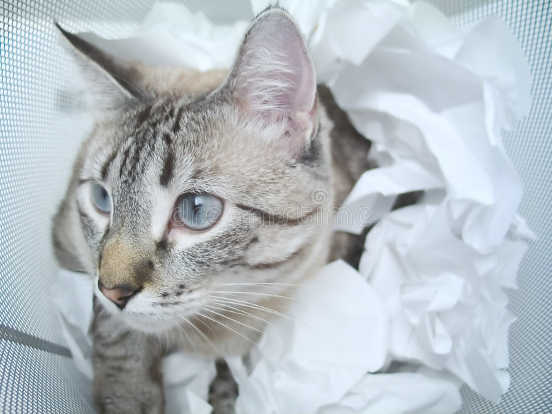 Download Kattspelrum arkivfoto. Bild av kattunge, catlike, miljard - 30190
