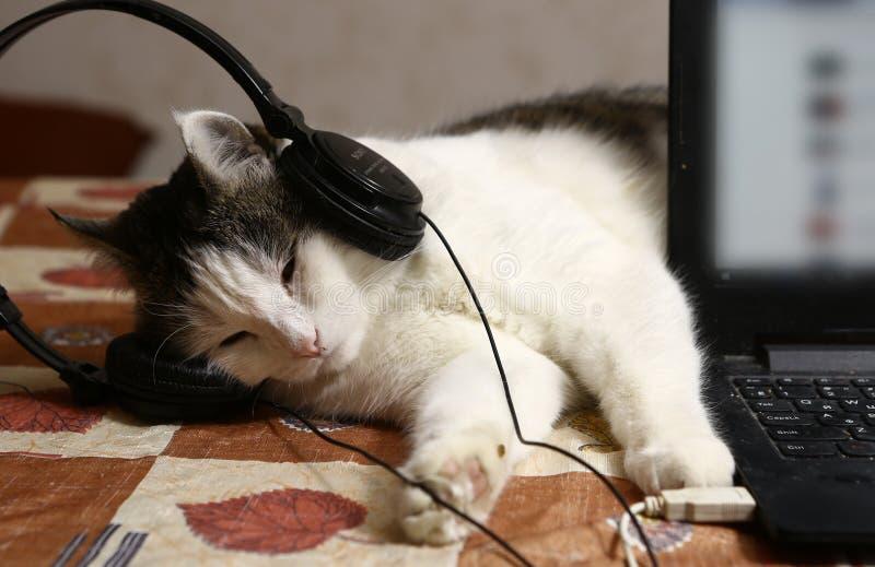 Kattstående i hörlurar och bärbar dator royaltyfri foto