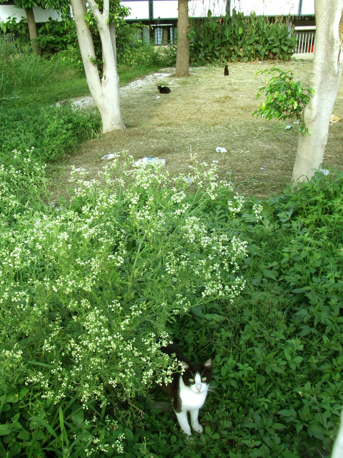 kattstad arkivbild