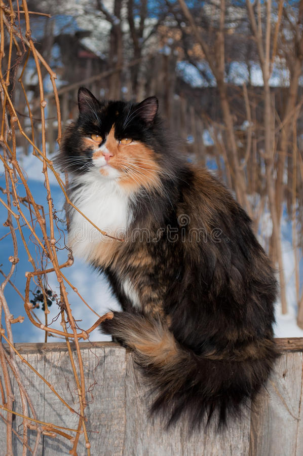 kattstaket arkivbild