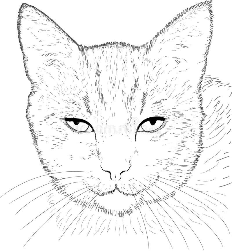 Kattteckning