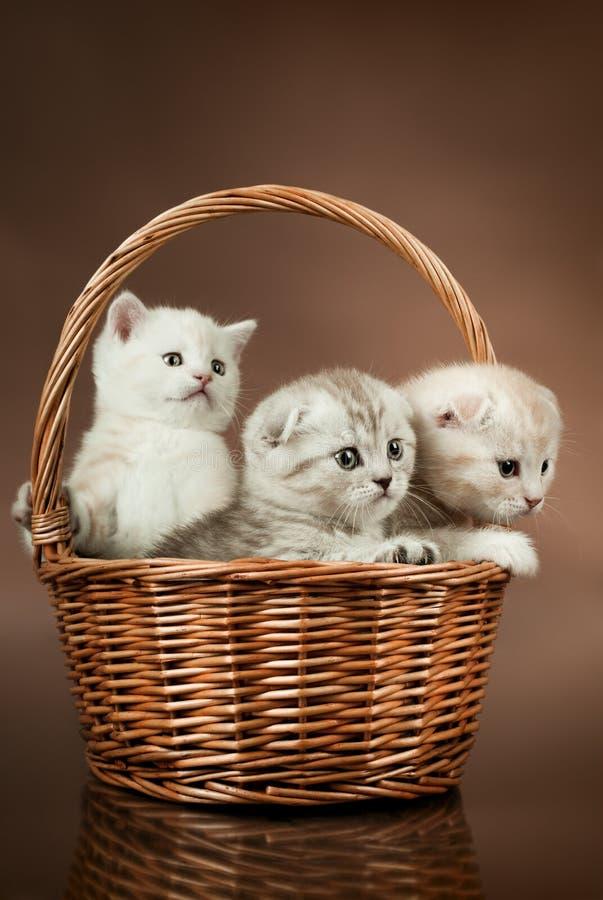 kattungar royaltyfri bild