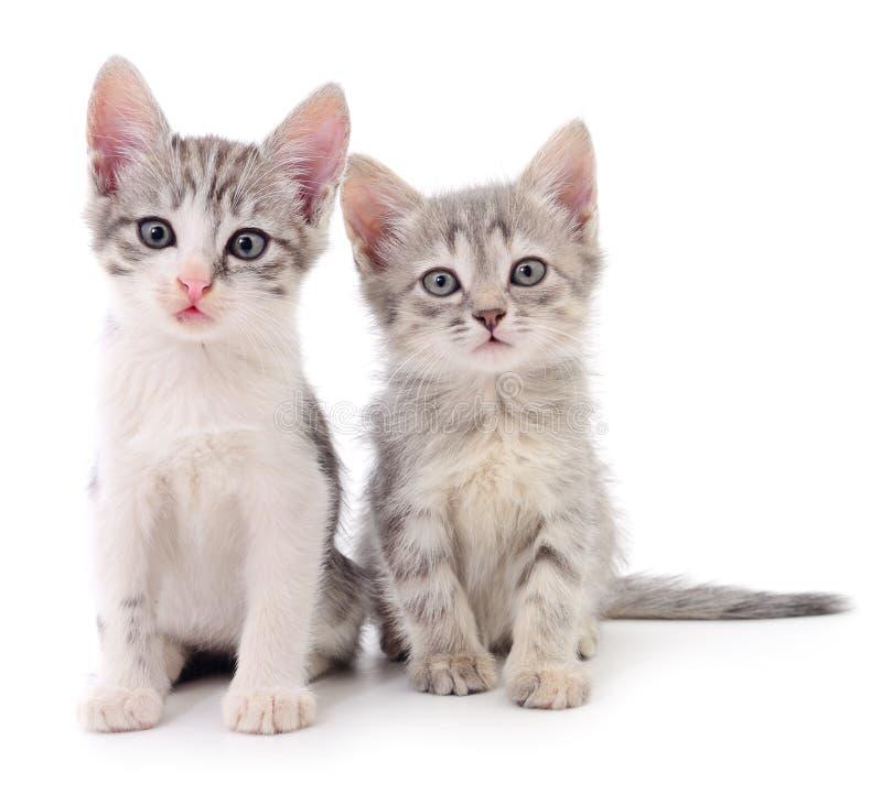 kattungar lilla två royaltyfri fotografi
