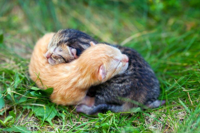 kattungar nyfödda två royaltyfri foto