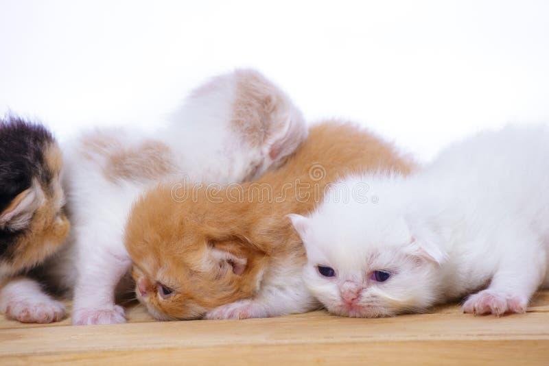Kattungar på den wood asken arkivbild