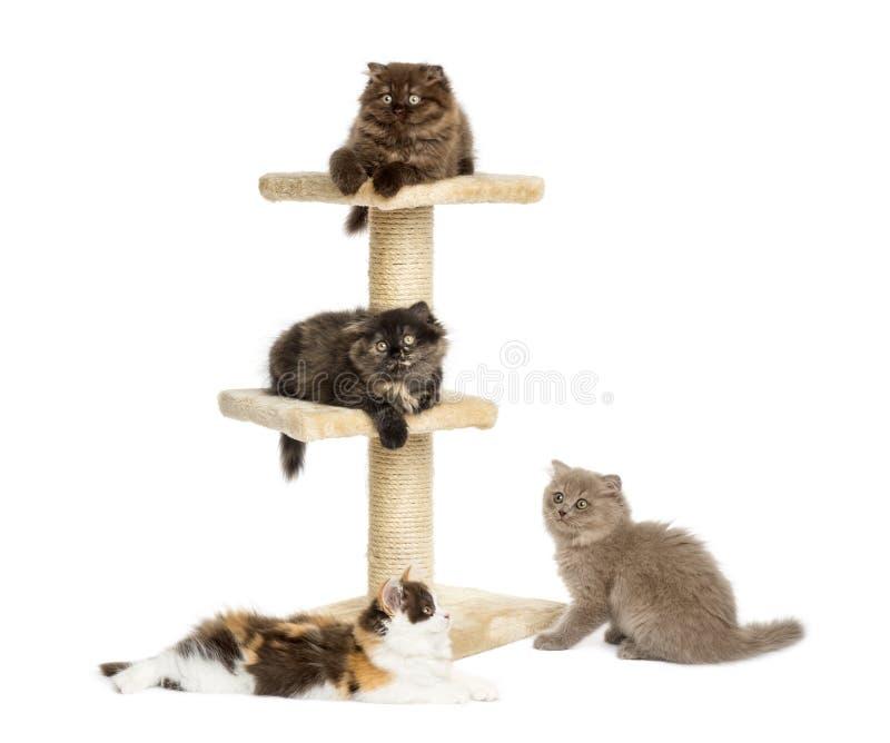 Kattungar på ett kattträd arkivfoto
