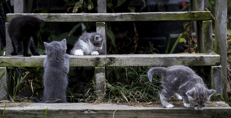 Kattungar på trätrappa arkivfoto