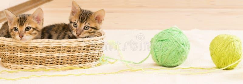 Kattungar sitter i en vide- korg och bredvid två tovor fotografering för bildbyråer