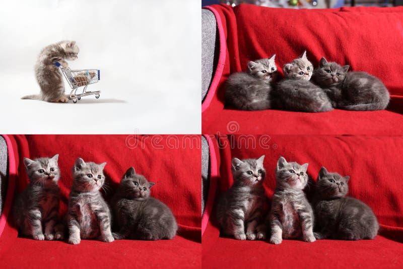 Kattungar som äter från en shoppingvagn, skärm för raster 2x2 royaltyfria bilder