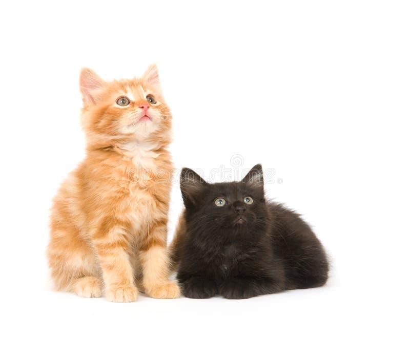 kattungar som ser upp två arkivfoton