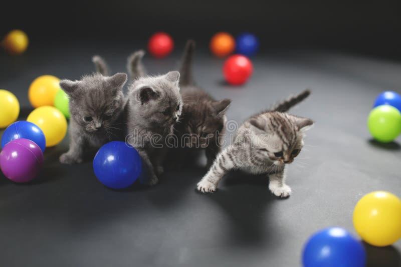Kattungar som spelar bollar royaltyfri fotografi