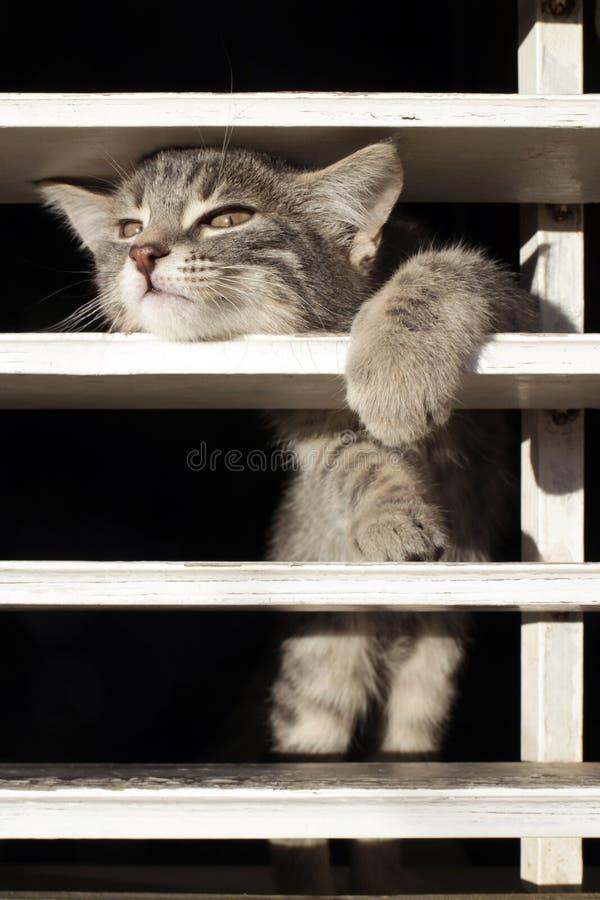 Kattunge bak stängerna fotografering för bildbyråer