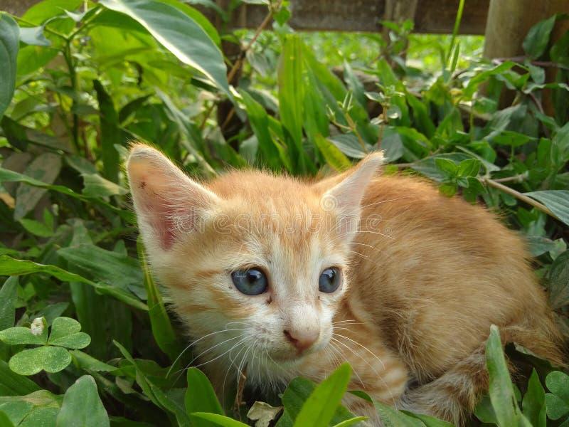 Kattunge bland gräset royaltyfria bilder