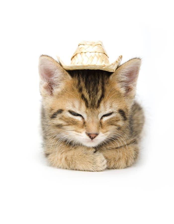 kattunge för cowboyhatt royaltyfria bilder