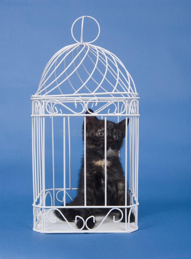 Kattunge i en bur
