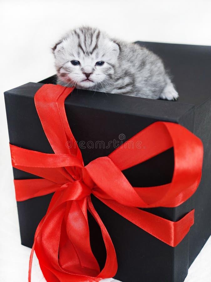 Kattunge i en gåvaask med en röd pilbåge arkivbilder