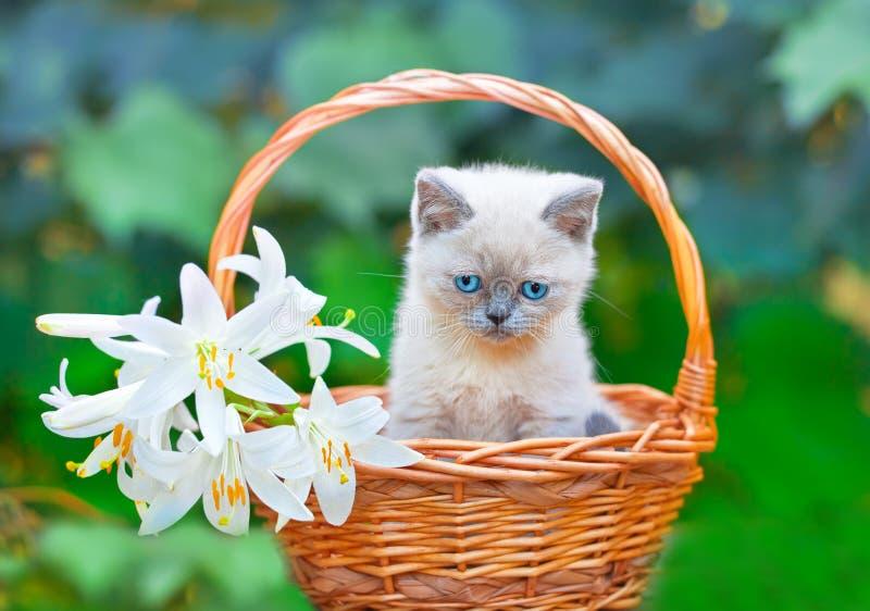 Kattunge i en korg med blommor arkivfoton