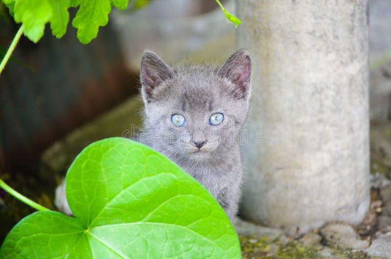 Kattunge i en trädgård royaltyfria bilder
