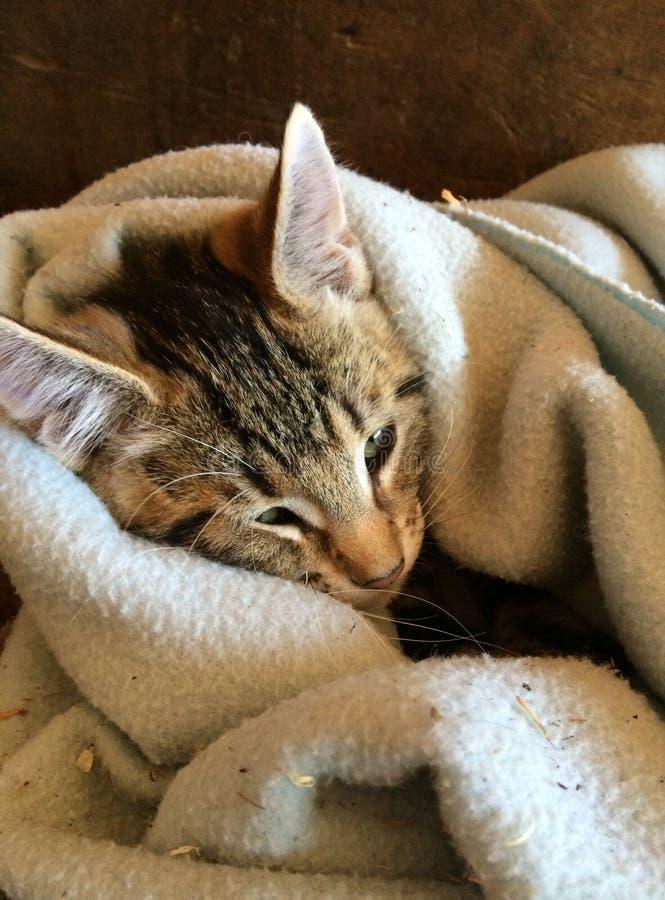 Kattunge i filt royaltyfria foton