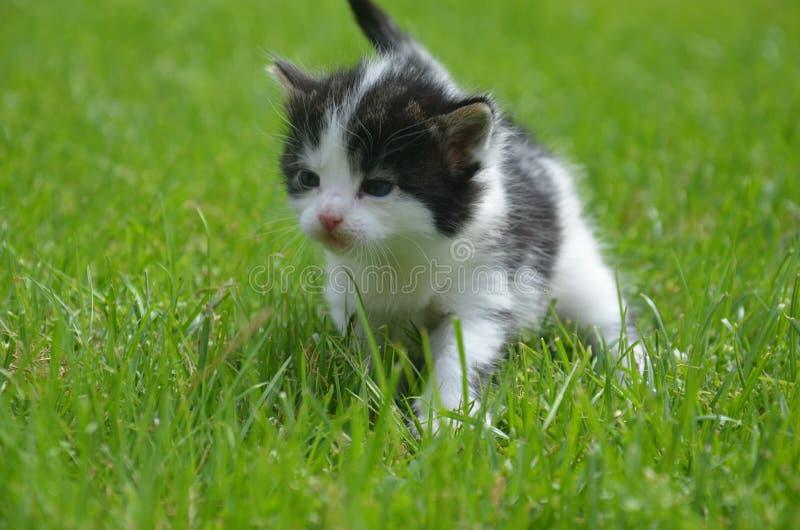 Kattunge i grönt gräs royaltyfri fotografi