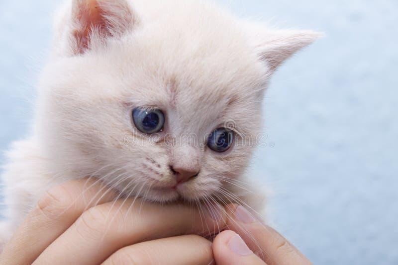 Kattunge i händerna av arkivfoto