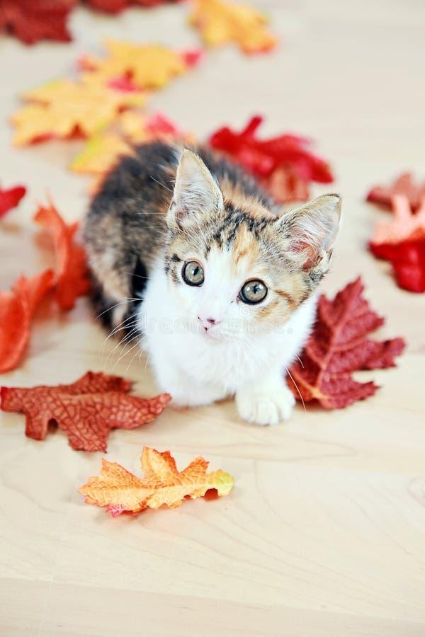 Kattunge i höstsidor arkivfoto
