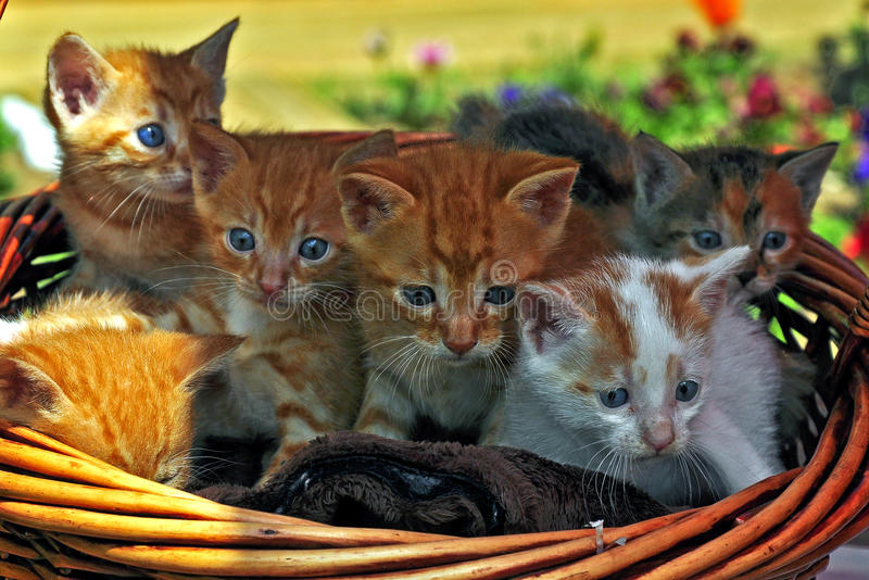 kattunge i korgen arkivbilder