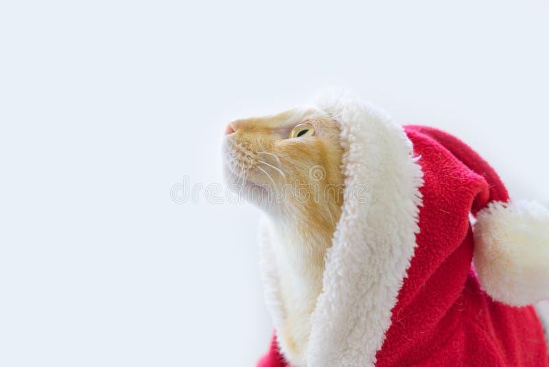Kattunge i santa torkdukeblick överst royaltyfri bild