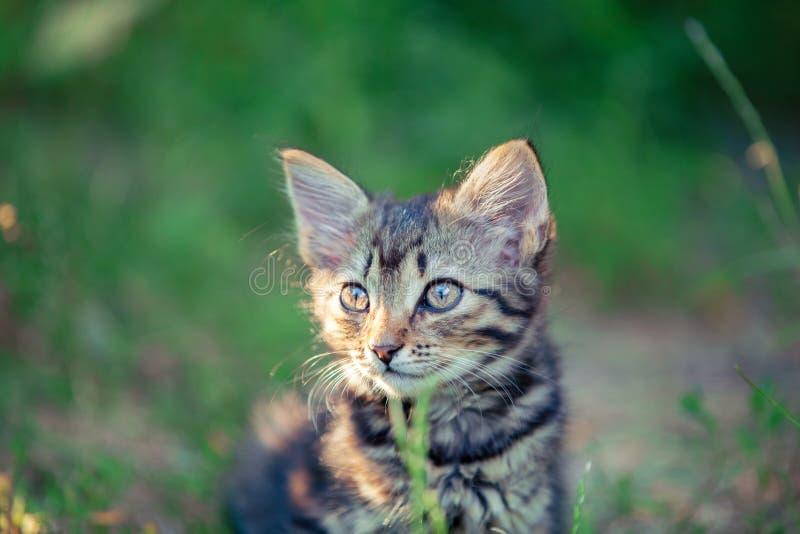 Kattunge i trädgården royaltyfri fotografi