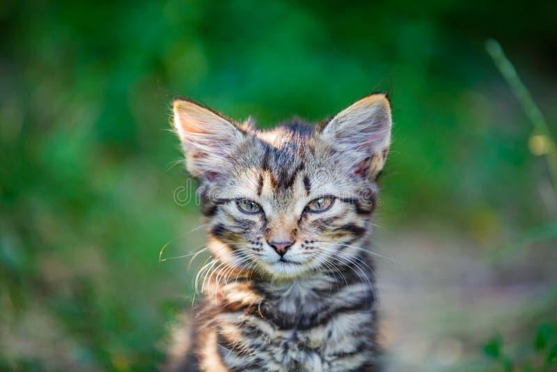 Kattunge i trädgården arkivfoto