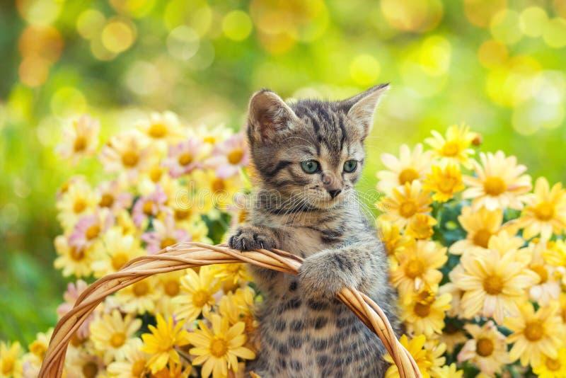 Kattunge i trädgården med blommor royaltyfri bild