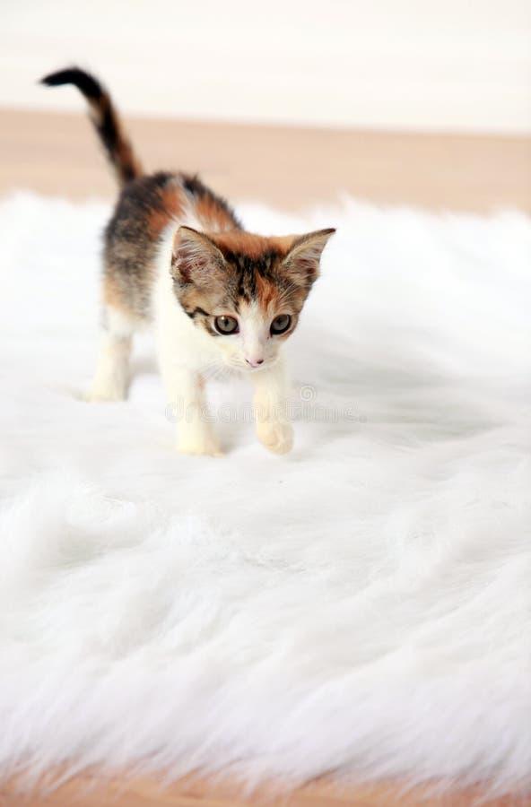 kattunge little royaltyfri fotografi