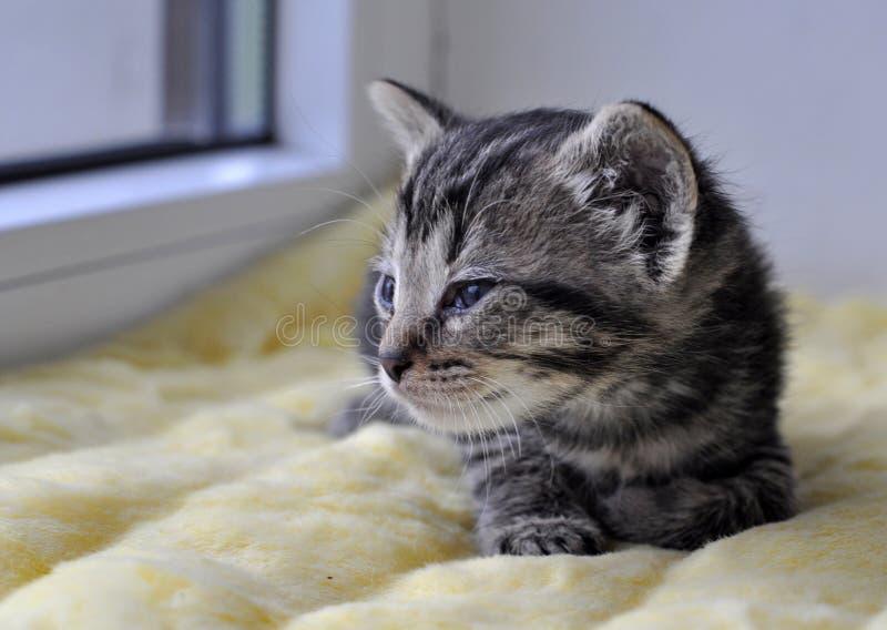 kattunge little som är nyfödd royaltyfri bild