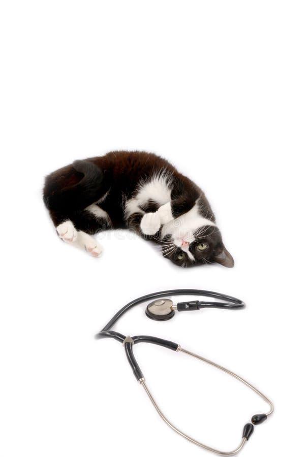Kattunge med en doktor royaltyfri bild