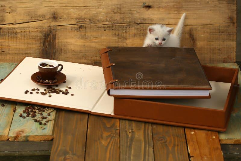 Kattunge med kaffebönor i kopp och bok royaltyfria foton