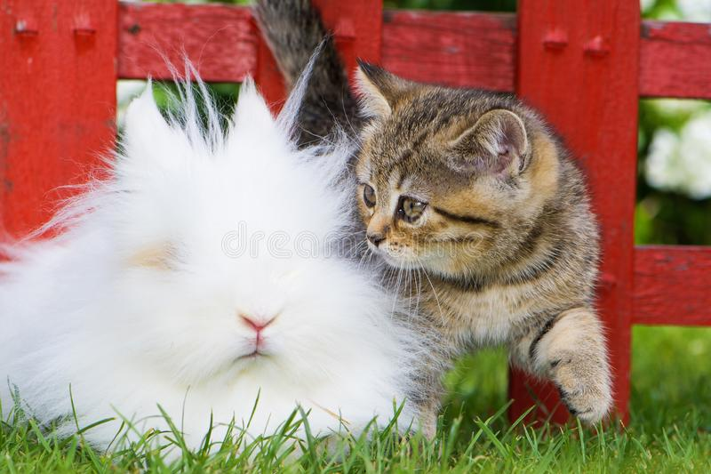 Kattunge med kanin på ett trädgårdstaket arkivbilder
