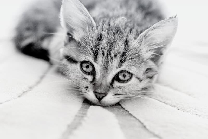 Kattunge med ledsna ögon arkivbild