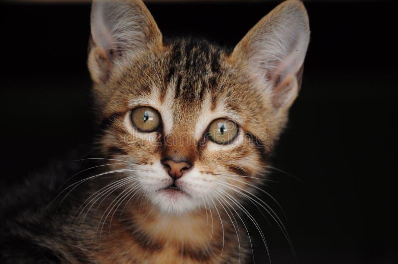Kattunge med mörk bakgrund royaltyfri fotografi