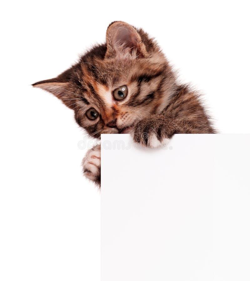 Kattunge med mellanrumet royaltyfri bild