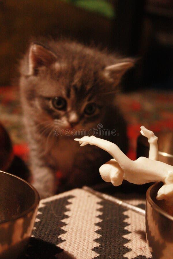 Kattunge och docka royaltyfria foton